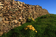 Traditional Photographs Prints - Dry Stone Fence Print by Aidan Moran