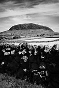 Dry Stone Wall. Posters - Dry Stone Wall And Slemish Mountain County Antrim Northern Ireland Poster by Joe Fox