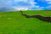 Dry Stone Wall Art - Dry stone wall in Swaledale by Louise Heusinkveld