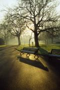 Park Benches Photo Metal Prints - Dublin - Parks, St. Stephens Green Metal Print by The Irish Image Collection