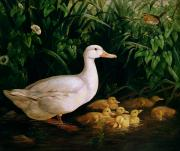 Baby Bird Painting Prints - Duck and ducklings Print by English School