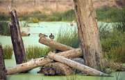 Water Plants Photos - Duck Perch by Bonnie Bruno
