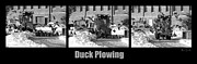 Mallard Prints - Duck Plowing Print by Bob Orsillo