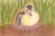 Ground Pastels - Duckling by Popokino Art