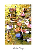 Bdmeredith Prints - Ducks a lOrange Print by Brian D Meredith