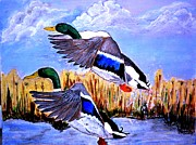 Two Ducks In Flight Art - Ducks in flight by Salomi Prakash
