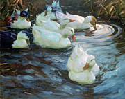 Painted Image Posters - Ducks On A Pond Poster by Photos.com