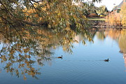 Spokane Posters - Ducks on Peaceful Autumn Pond Poster by Carol Groenen