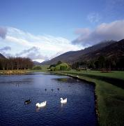 Mourne Prints - Ducks Swimming In The River, Silent Print by The Irish Image Collection