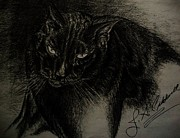 Pictures Of Cats Drawings Prints - Dudley  Pencil Print by Julie Ann Caldwell