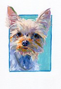 Yorkshire Terrier Art Framed Prints - Duke Framed Print by Kimberly Santini