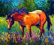 Cowboys Metal Prints - Dun Mare Metal Print by Marion Rose