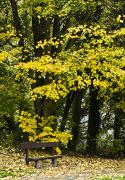 Autumn Foliage Prints - Dun Na Ri Forest Park, County Cavan Print by Peter McCabe