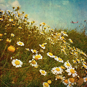 Sand Dune Photos - Dune Daisies by Paul Grand Image