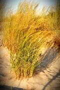 Dune Grass II  - Jersey Shore Print by Angie Tirado