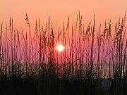 Beach Photographs Posters - Dune Grass Sunset Poster by Bill Cannon