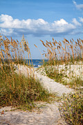 Path To Beach Posters - Dune Pathway Poster by Dawna  Moore Photography