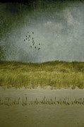 North Sea Art - Dunes by Joana Kruse