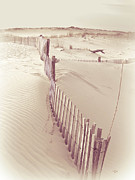 Rehoboth Beach Prints - Dunes On The Cape Print by Trish Tritz