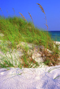 Grayton Beach Posters - Dunes Trail The Emerald Coast Poster by Thomas R Fletcher