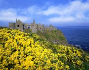 Spring Scenes Framed Prints - Dunluce Castle, Co. Antrim, Ireland Framed Print by The Irish Image Collection
