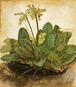 15th Century Prints - Durer Tuft Of Cowslips Print by Granger