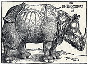 Rhinoceros Photo Posters - Durers Rhinoceros, 1515 Poster by Sheila Terry