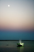 Monkey Mia Photos - Dusk and Dolphin by Caroline Walker