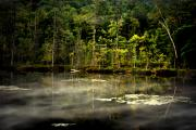 Fog Rising Prints - Dusk at Beaver Pond Print by Emily Stauring