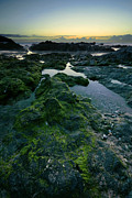 Seaweed Photos - Dusk by the ocean by Jaroslaw Grudzinski