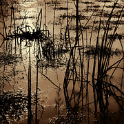 Reflective Water Photos - Dusk Closes In by Bonnie Bruno
