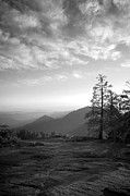Sequoia National Park Prints - Dusk in Sequoia Print by Timothy Johnson
