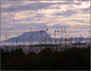 Holiday Greeting Cards Posters Posters - Dusk over Clare Island Poster by Paul  Mealey