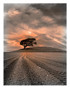 Plough Framed Prints - Dusk Tree Framed Print by Mal Bray