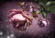 Delicate Mixed Media - Dusky Pink Roses by Svetlana Sewell