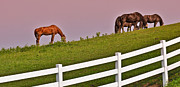 Sun Rise Prints - Dusty Rose Sky on the Ranch Print by Brian Mollenkopf