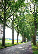 Dutch Landscape Posters - Dutch Country Road Poster by Carol Groenen