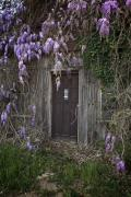 Bruce Flashnick - Dutch Fork Door Wisteria