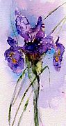 Watercolor Card Prints - Dutch Iris Print by Anne Duke