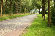 Trees Photos - Dutch Road 2 by Carol Groenen