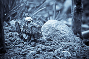 Miniatures Photos - Dwarf Lost In The Enchanted Forest by Marc Garrido