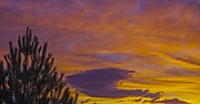 Purple Metal Prints - Dynamic Sunset Metal Print by Scott McGuire