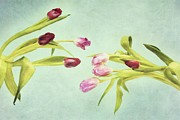 Fineart Prints - Eager For Spring Print by Priska Wettstein