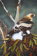 Fineart Paintings - Eagle And Chick by Brian Leverton