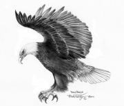 Graphite Drawings Drawings Posters - Eagle attacking Poster by Bob Patterson