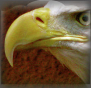 Image Of Bird Prints - Eagle Beak Power Print by Debra     Vatalaro
