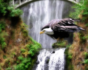 Constance Woods - Eagle by the Waterfall