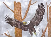 North American Wildlife Drawings Posters - Eagle Poster by Don  Gallacher