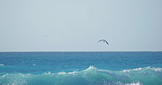 Flying Photos - Eagle Flying Over Sea by Fabian Jurado