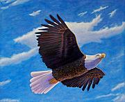 Bald Eagle Painting Framed Prints - Eagle Heart II Framed Print by Brian  Commerford